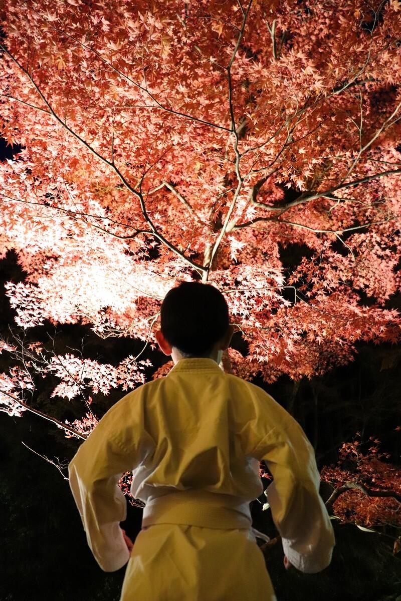 奥津渓autumn foliage(okutsukei)night view