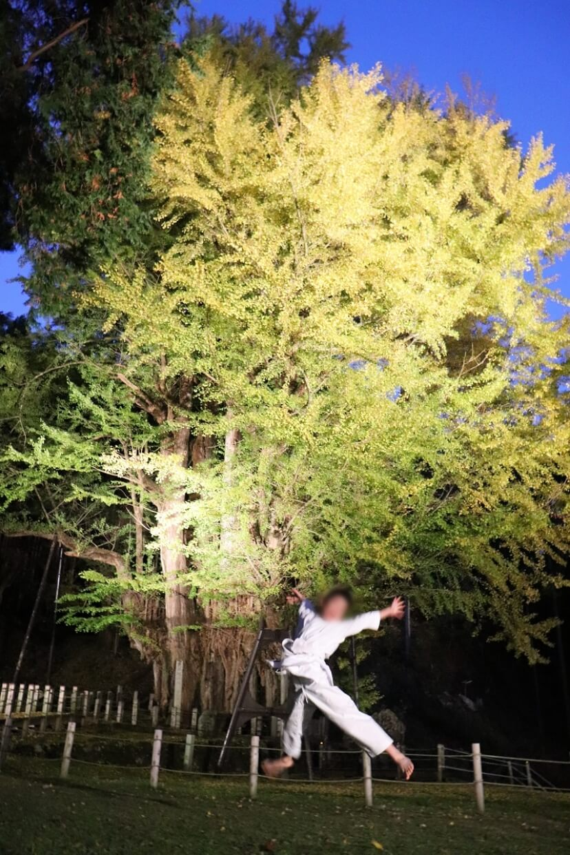 The big ginkgo tree of Bodai-ji(菩提寺の大イチョウ)